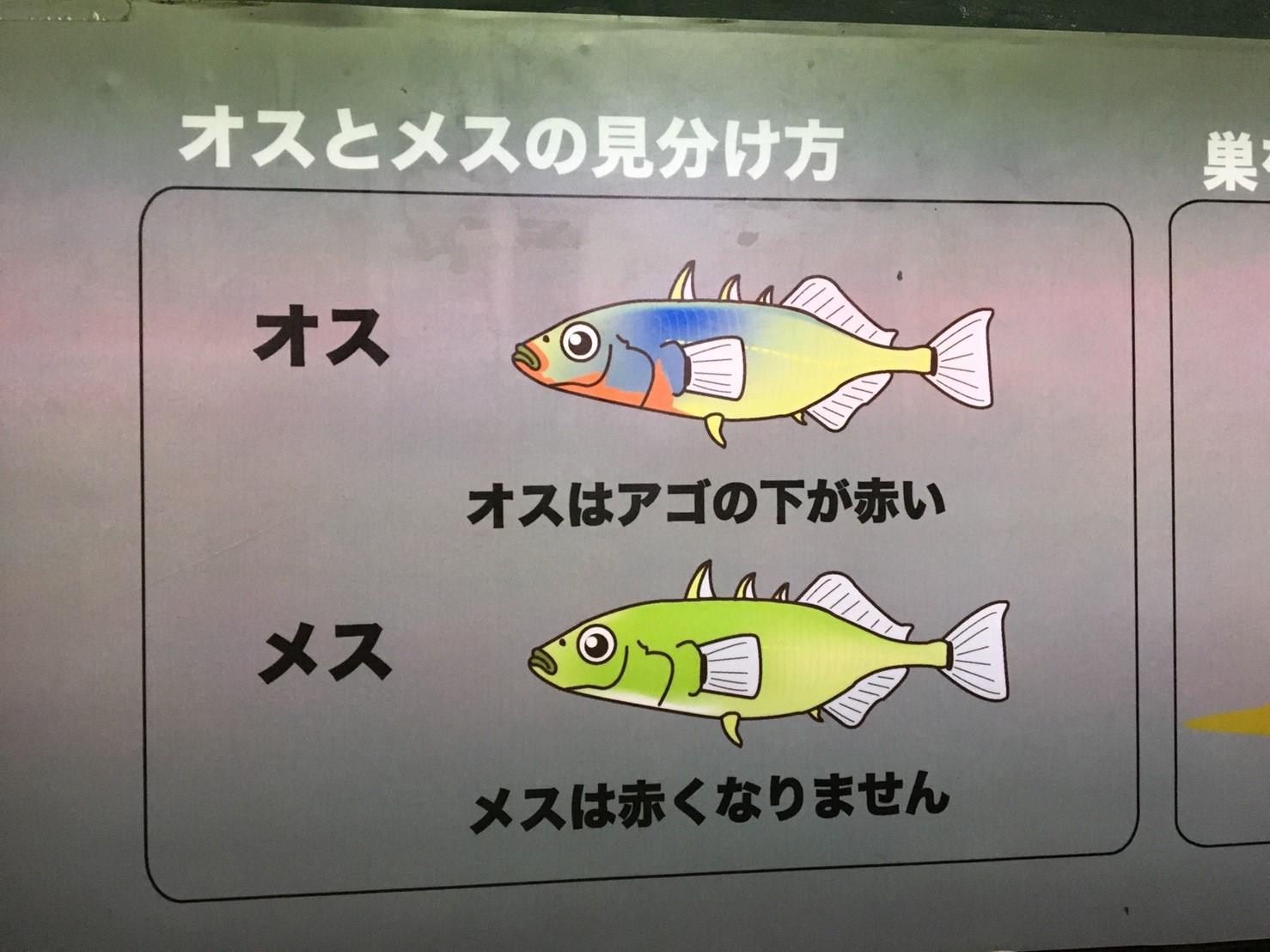 小学生イベント猪苗代編_50